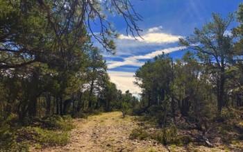 Sacred Presence: Forest Management at the Mothership